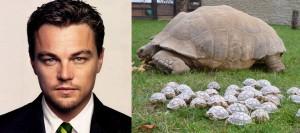 leo-tortoise