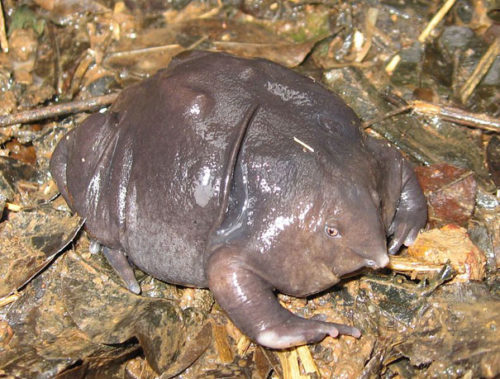 Weird Animal Indian Purple Frog